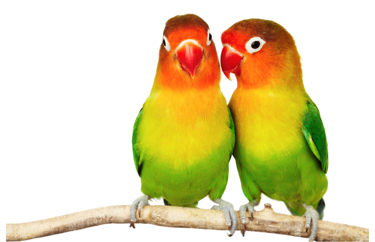 Animal Parrot Clipart Sunny 95
